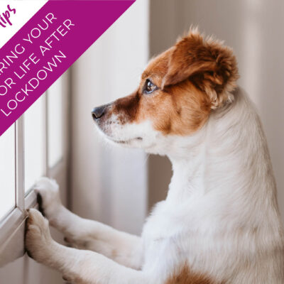 Preparing your pet for life after lockdown