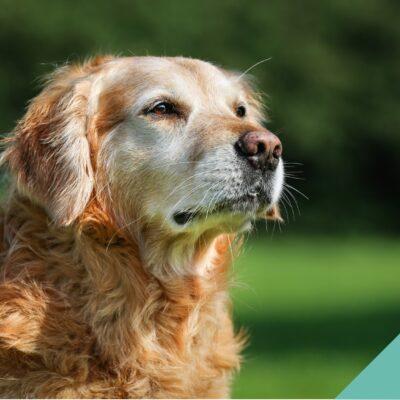 Senior Pets Focus