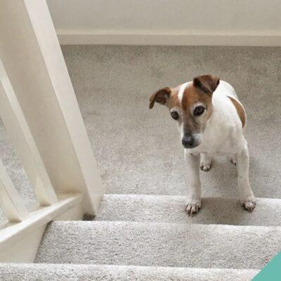 Focus on Osteoarthritis in dogs