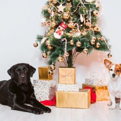 Holiday Season 2020 Opening Hours