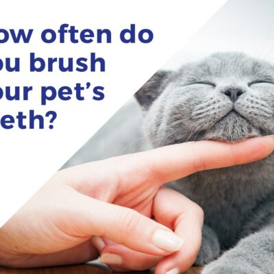Tooth Brushing Guide for Small Animals