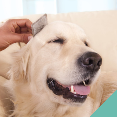Advice in grooming your cat or dog at home