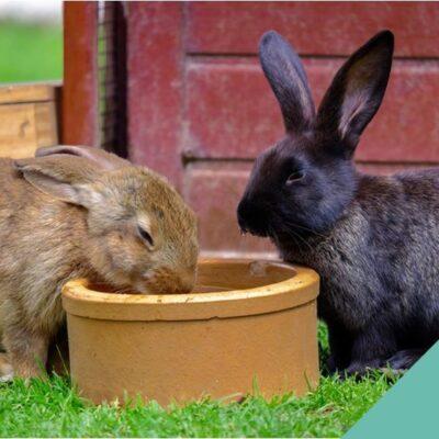 Rabbit Dental Care
