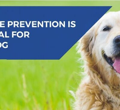 Flea, tick and worm prevention for dogs