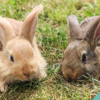 Rabbit Space requirements
