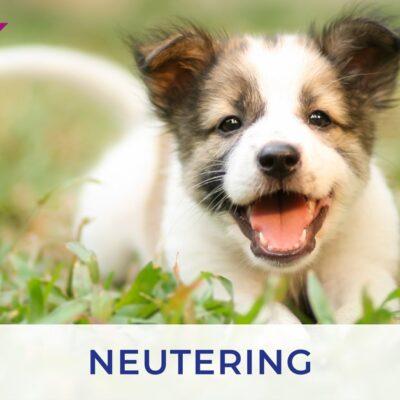 Neutering puppies and kittens