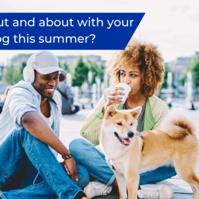 Keeping your dog safe whilst out and about this summer