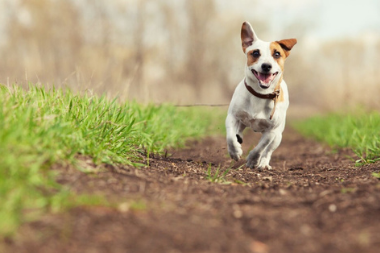 Flea and Worm Treatment For Your Dog at Abbey Vets