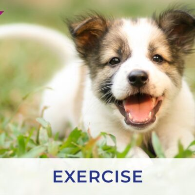 Leeds Vets advice on exercising your puppy and kitten