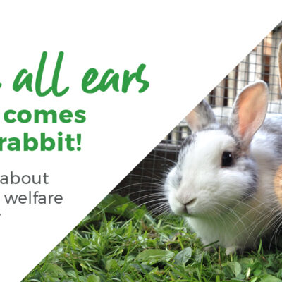 We're all ears when it comes to your rabbit