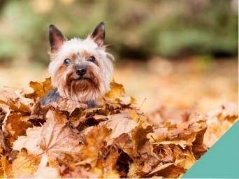 Autumn dangers