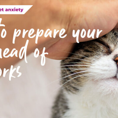 How to prepare your cat ahead of fireworks season