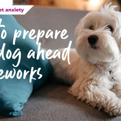 How to prepare your dog ahead of fireworks season