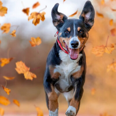 Preparing your pet for a change in season
